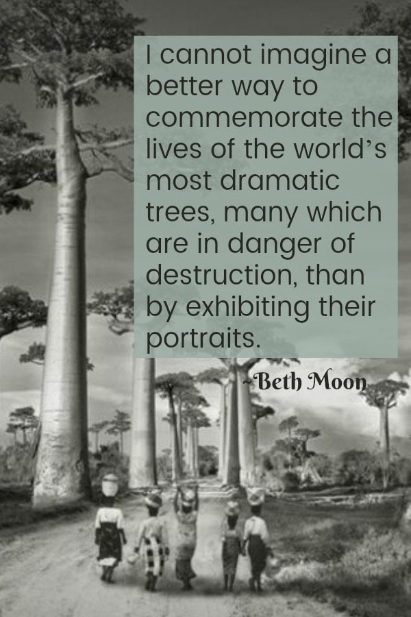 Beth Moon Tree Portrait EclecticEvelyn.com
