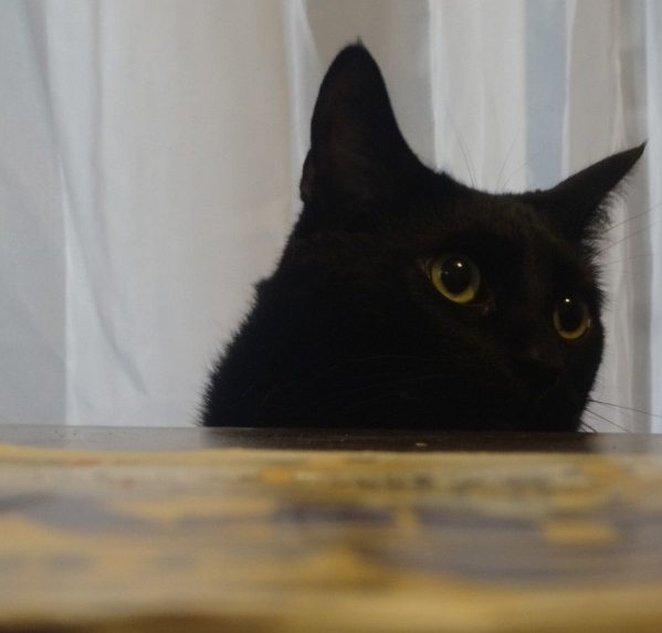 black cat original gangster