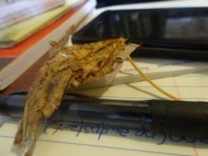 still life on desk leaf pen paper