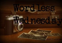 #WordlessWednesday EclecticEvelyn.com