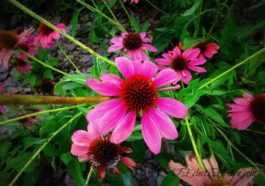 Flower Power #WordlessWednesday EclecticEvelyn.com
