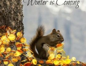 Gathering Nuts for Winter #SOCS EclecticEvelyn.com