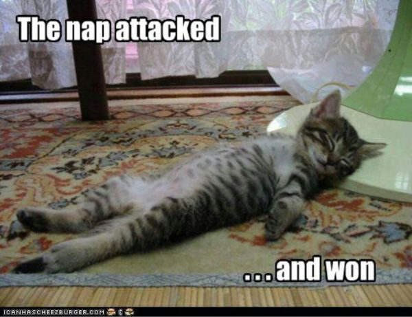 Nap won EclecticEvelyn.com