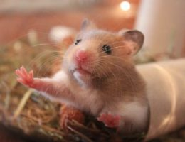 5 Life Lessons from a Hamster EclecticEvelyn.com