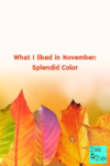 What I liked in November: Splendid Color
