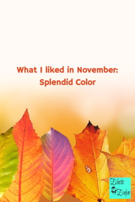 What I liked in November EclecticEvelyn.com