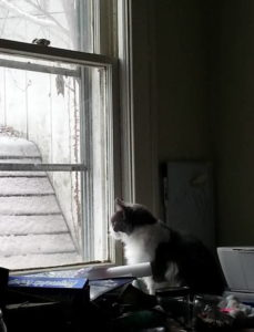 #LittleEdie watching snow EclecticEvelyn.com