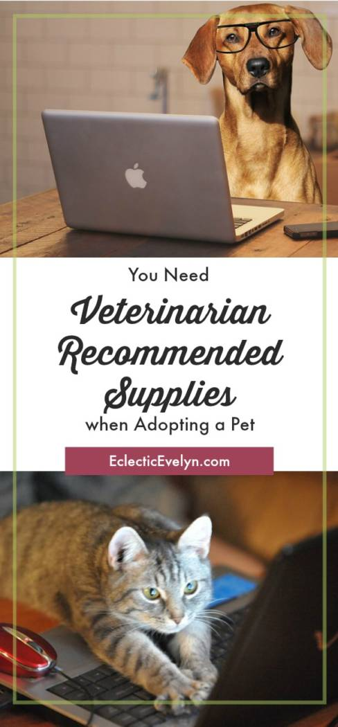 You Need Veterinarian Recommended Supplies when Adopting a Pet EclecticEvelyn.com