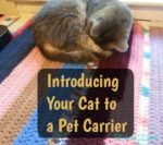Introducing Your Cat to A Pet Carrier