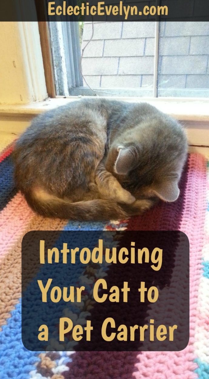 Introducing Your Cat to A Pet Carrier EclecticEvelyn.com