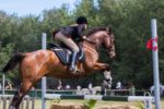 The Beginning Basics of Horse Jumping